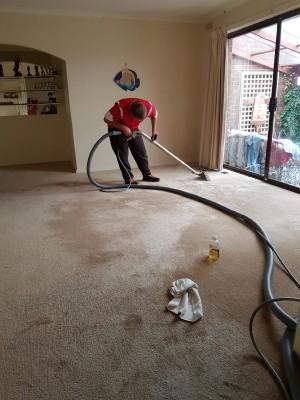 Ballarat Sasha carpet cleaning